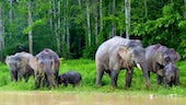 A herd of elephants beside water