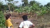 Banana trees shading mint on Uganda cropland