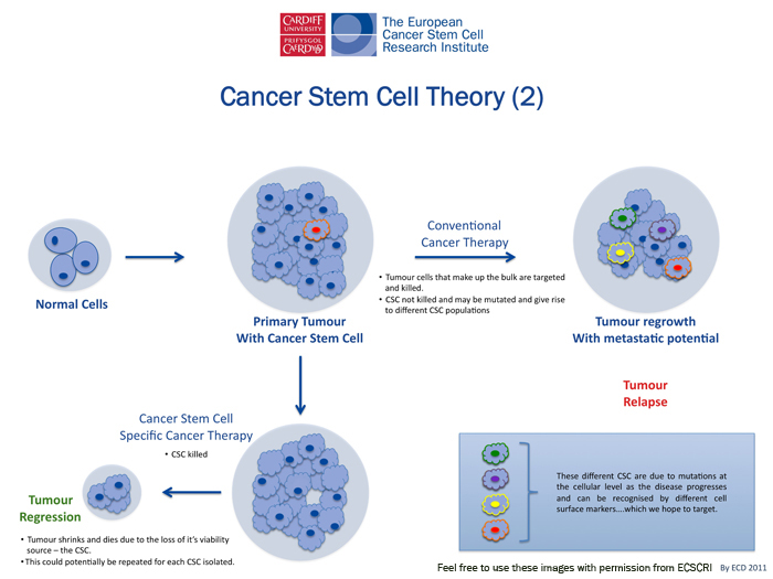 the unique facts about stem cell research Stem cells fast facts cnn library thereby allowing federally funded embryonic stem-cell research to continue while the obama administration appeals.