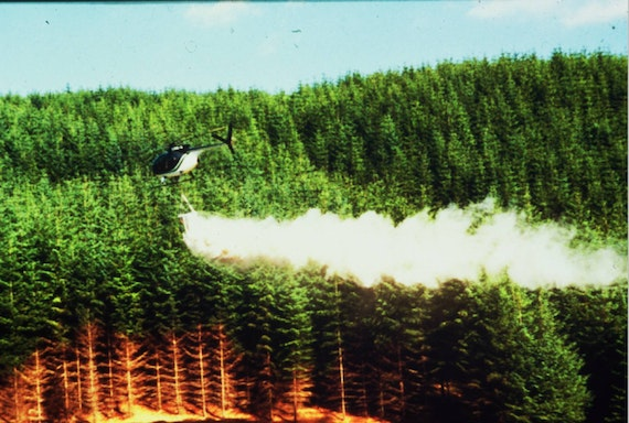 Helicopter dumps lime over conifer forest
