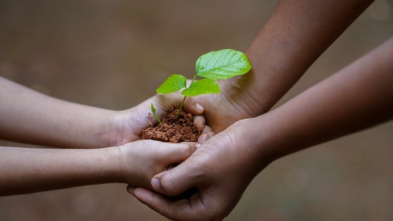 Pair of hands holding a seedling
