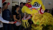 Traditional Chinese Lion Dance to celebrate the New Year