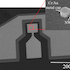 Diagram of InAs nanowire photodiode on silicon