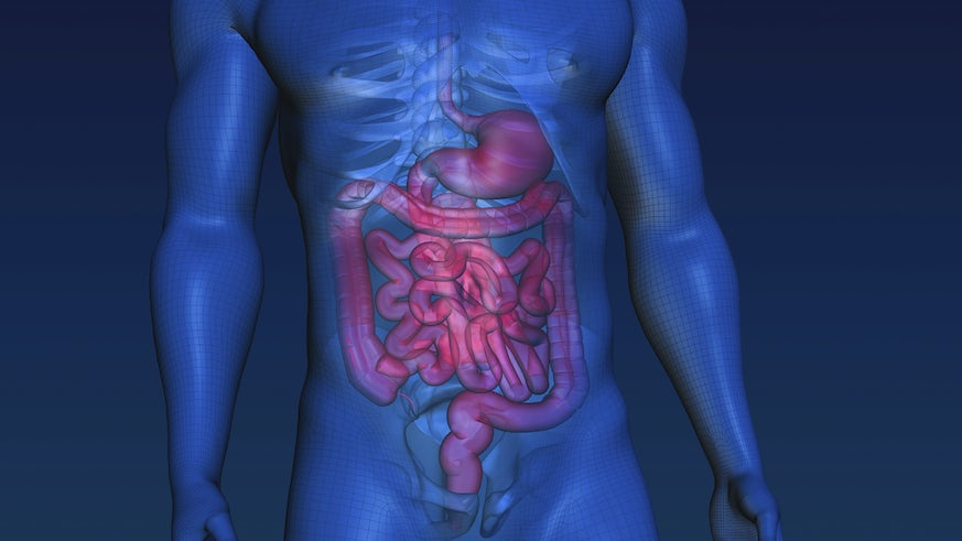 3D image of human intestines