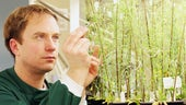 Biosciences researcher with plants