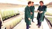 Horticultural unit