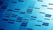 Genetic fingerprint