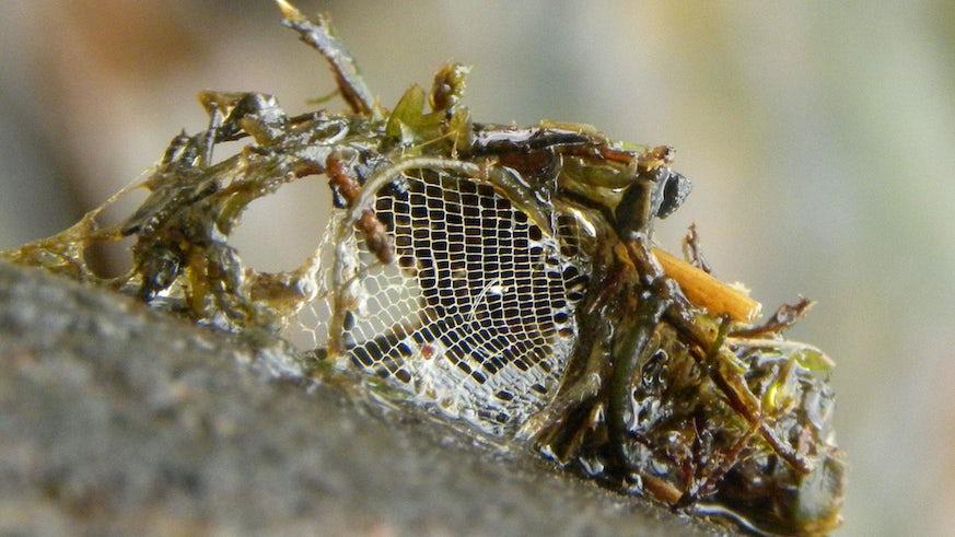 Net spinning