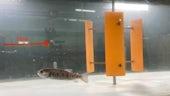 Fisharoundturbines