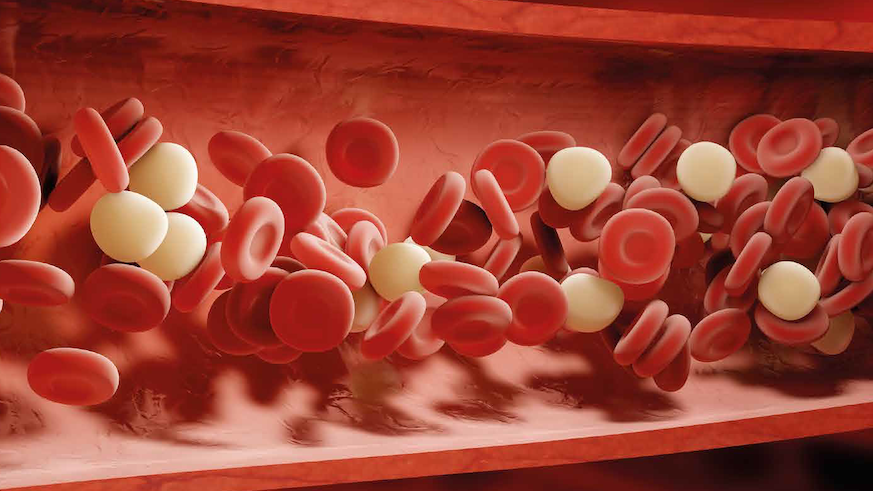 Lipids and red blood cells