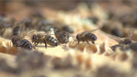 Close up of bees on a honeycomb