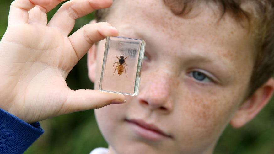 Child holding bee
