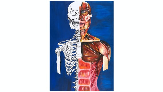 What You See is What You Get; an Anatomical Study