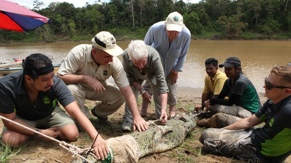 Image of Dame Judi with the team as they examine a crocodile