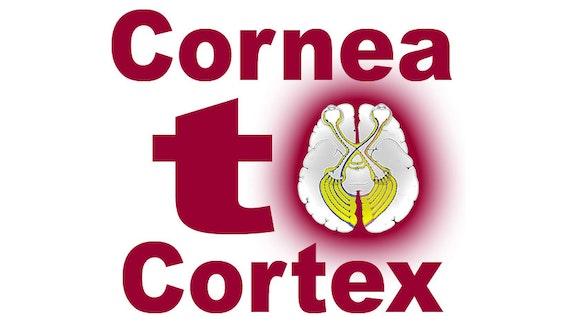 Cornea to Cortex