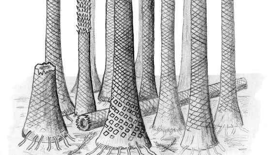 An illustration of what the Svalbard fossil forest may have looked like
