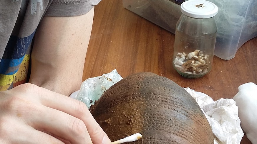 Senior Conservator working on the Bronze Age vessel recently excavated in North Wales