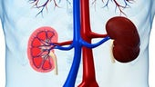 Kidney cross section in body