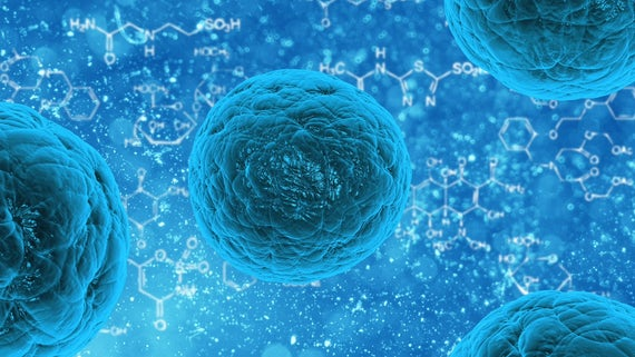 Stem Cells 1