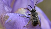 Close up of bee on purple flower