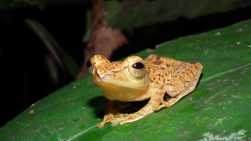 Small frog on a large leaf