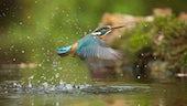 Riverbird(1)