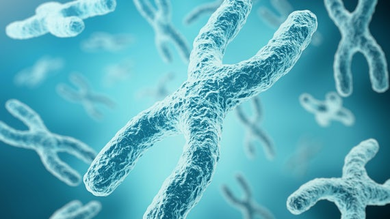 Stock image of a chromosome