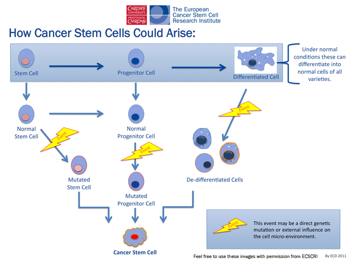 stem cell research and breast cancer essay