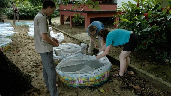 Students using paddling pools for sampling in Tobago