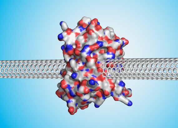 Protein connecting two nanocarbons