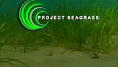 project seagrass logo