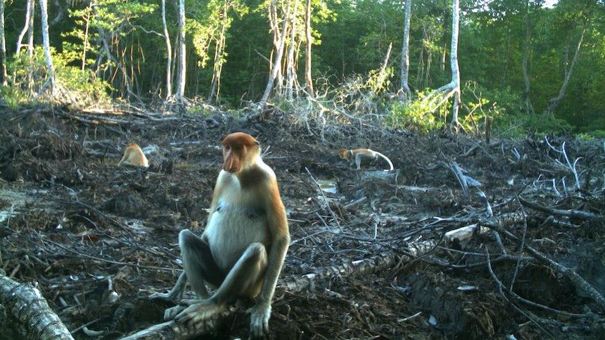 Mangrove clearing