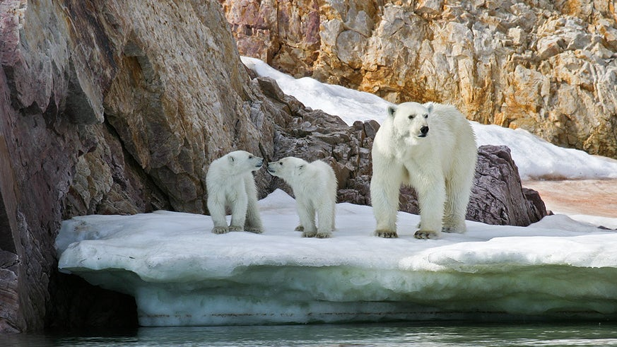 Image of polar bear and cub
