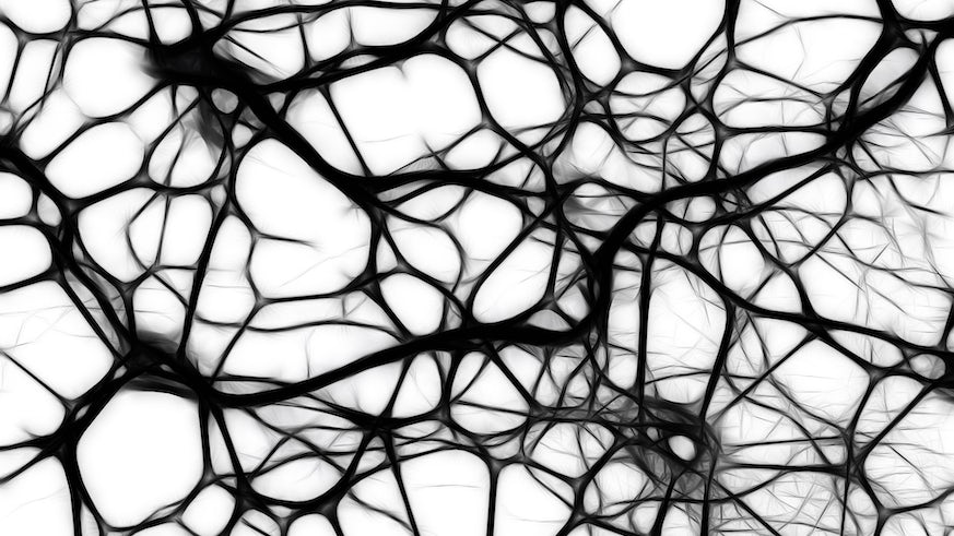 Black and white network of brain cells