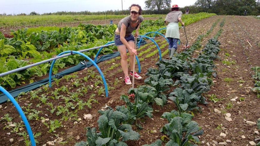 Volunteers planting crops