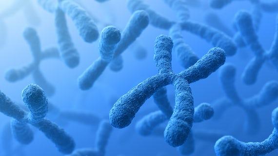 Chromosome stock image