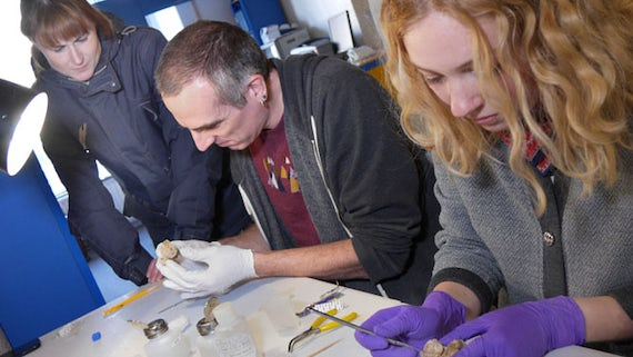 Conservators at work on Blodwen, stone age skeleton