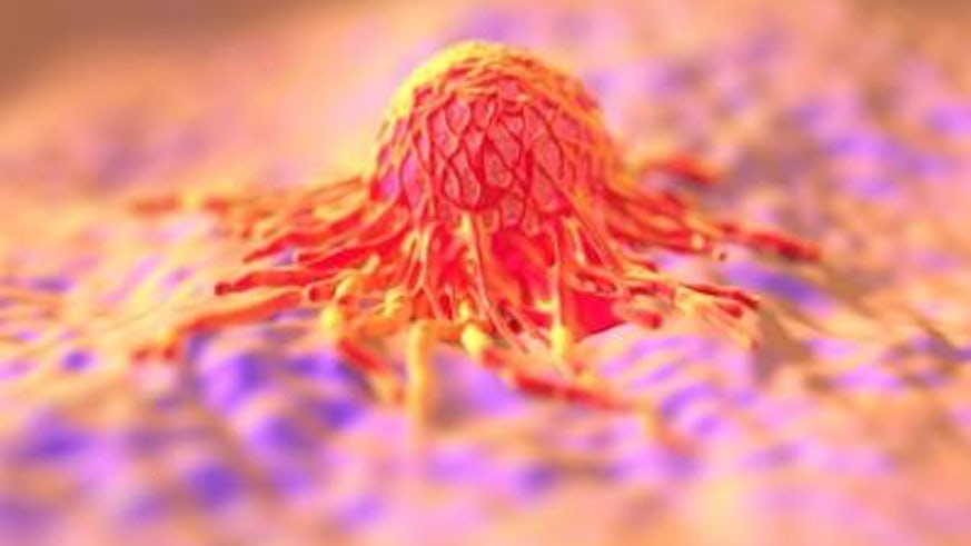 Cancer cell survival puzzle solved