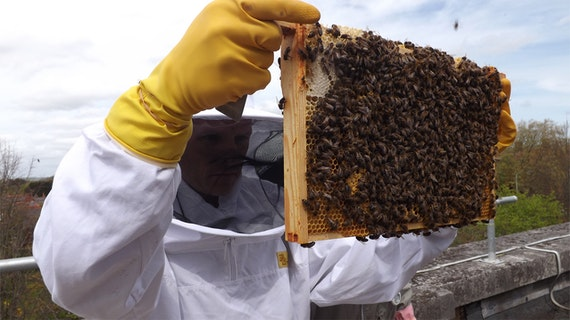 pharmabees inspection
