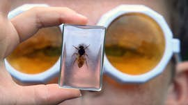 Close up of bee in glass
