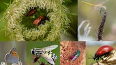 Composition image of different insects