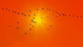 Stock image of birds in sky