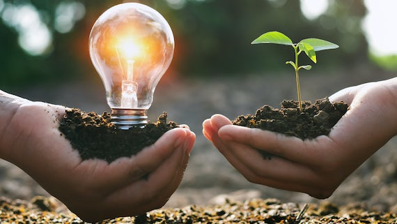 Stock image of person holding lightbulb and sapling in earth