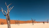 DryAfrica
