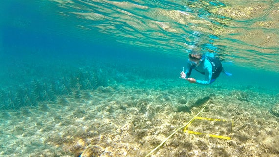 Underwater species survey in Samos