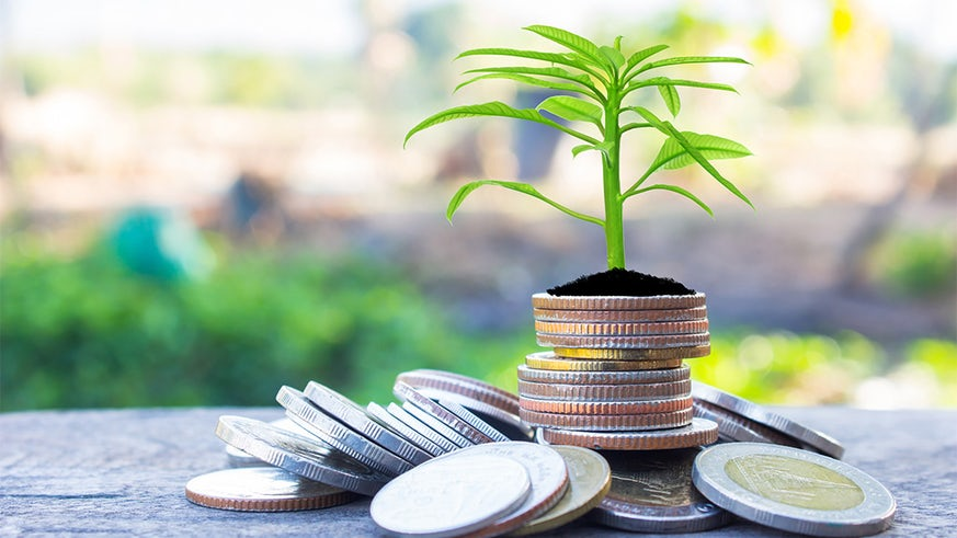 Coins with young plant on table with backdrop blurred of nature stock photo