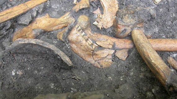 Mesolithic Teeth