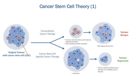 Cancer stem cell theory