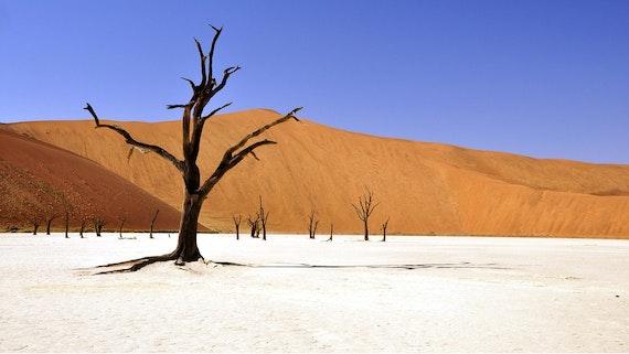 A dry Namibian landscape