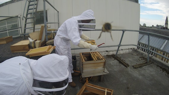 installation of bute bees